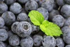 Bilberry, Grapes, Blueberry, and Banana: The Benefits These Fruits Provide
