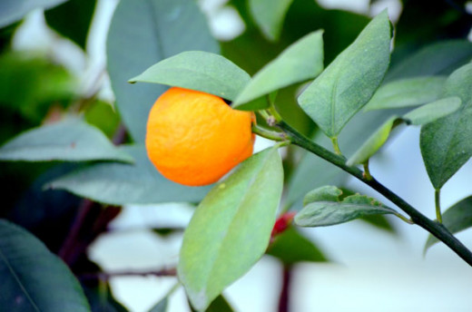 Tangerines are an abundant source of vitamins and minerals which can help your body in a variety of ways.