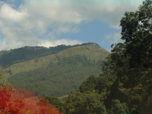 THE QUEEN OF MOUNTAINS ' - KODAIKANAL View 6