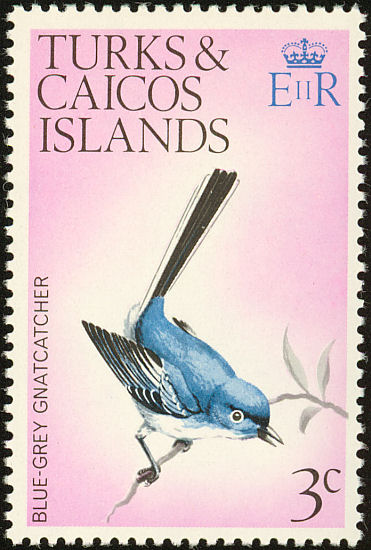 Turks & Caicos Blue-grey Gnatcatcher Postage Stamp