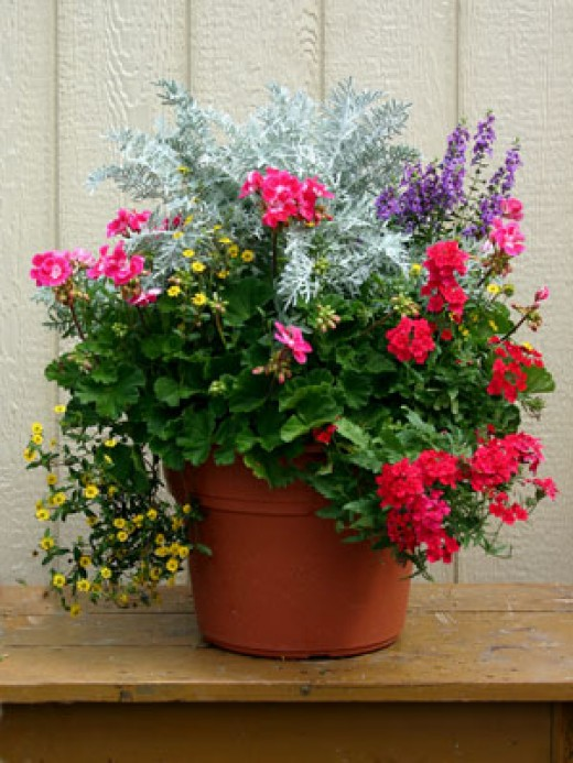 Outdoor container gardening planting a beautiful pot of for Garden arrangement of plants