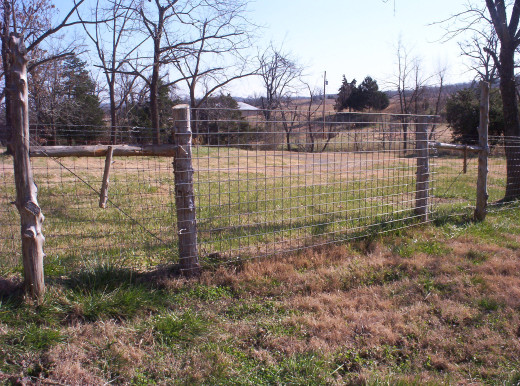 Goat Pasture Gate (built with a 5 foot high utility panel)