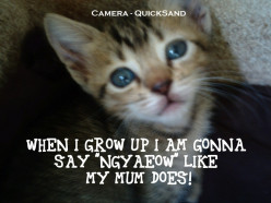 About Felis Catus - Do Cats Really Say Meow? No They Don't!