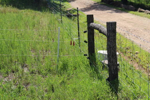 Poly-wire attached to end posts. A single strand of  poly-wire is attached to the web wire fencing along the road with fiberglass insulators that hold the wire 8 to 12 inches from the web wire. This keeps the goats from rubbing against the web wire.