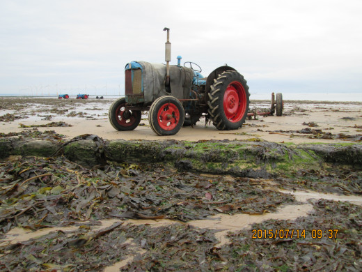 After breakfast at the Claxton Hotel I took a walk along Redcar beach. You notice the number of tractors and the mounds of kelp and seaweed washed ashore. The tractors move inshore fishing boats up the beach to the slipways