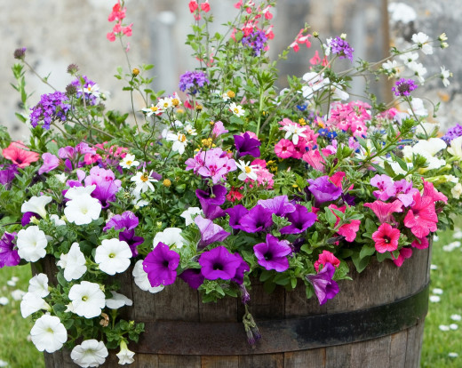 Growing plants in a garden or in containers can be fun for children.