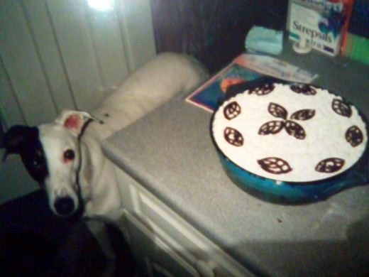 Bracken eyes the birthday cake.