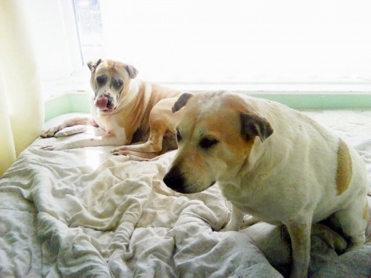 Roy (left) and Squeaker on one of the beds - it was soon not possible to sleep on it, as the mattress was ripped by the dogs and the springs popped out.