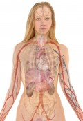 Learn Anatomy & Physiology Online