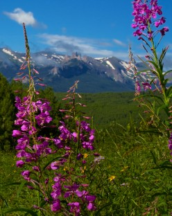 Fire Weed Frames Castle Mountain