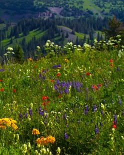 Wildflower Medly