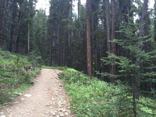 Enjoy the smell of pines, clear, cool air, and pristine forests, on almost any trail in Banff National Park, Canada