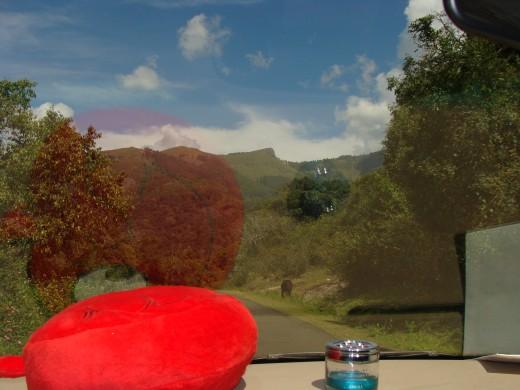 THE QUEEN OF MOUNTAINS ' - KODAIKANAL View 7
