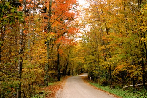 A country road in the fall of the year