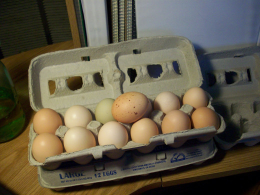 A nice, homegrown mixture of eggs, including brown, cream, tan, light green, and speckled. These eggs will cause less allergies.