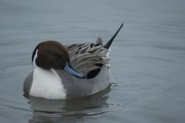Taken at Norfolk England.