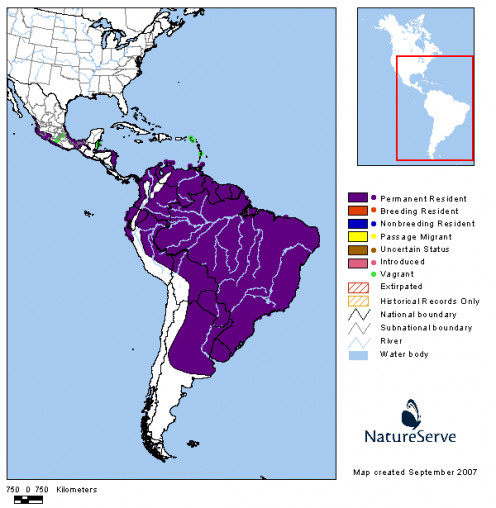 The Collared Plovers normal range only extends northward to the southern half of the Mexican coast.