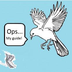 Chasing Rarities - Bird Finding