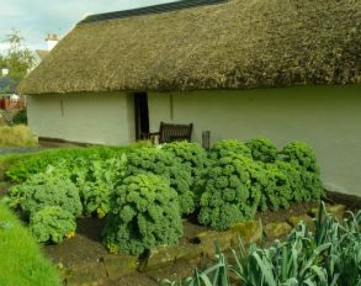 Kailyard at Robert Burns cottage