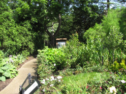 See The Rodef Shalom Biblical Botanical Garden
