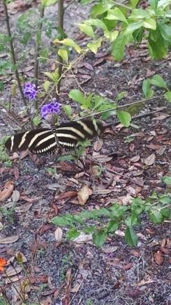 Butterfly Garden Dreamland: A Photo Journal