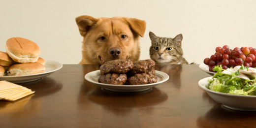 7 Countries Where People Eat Cat or Dog Meat