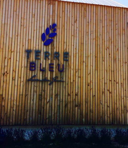 Terre Blue Lavender Farm
