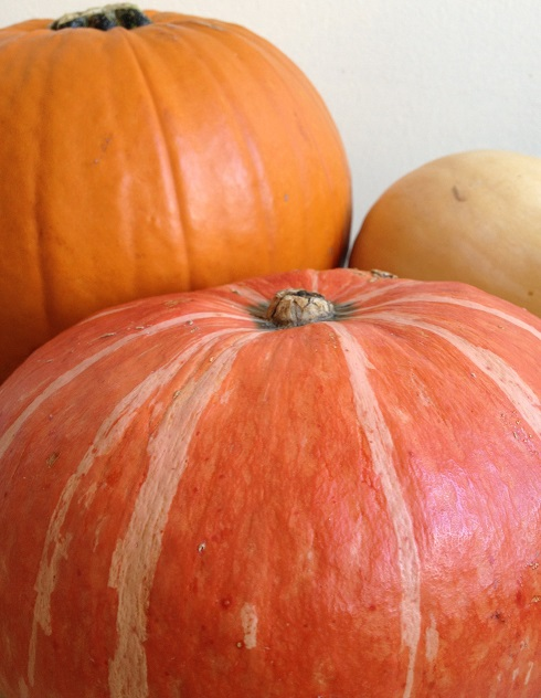 Pumpkin, kabocha and butternut squashes