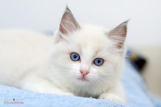 Kitty the Pretty Cat
