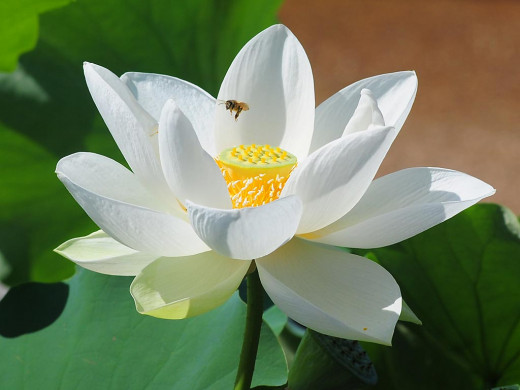 The waterlily or lotus flower often symbolizes Buddhism. The flower stands for enlightenment, because it grows out of slimy mud, which symbolizes suffering.