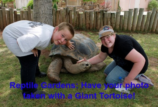 Reptile Gardens is a terrific value with exhibits, shows, and places for kids to play, run, and explore.