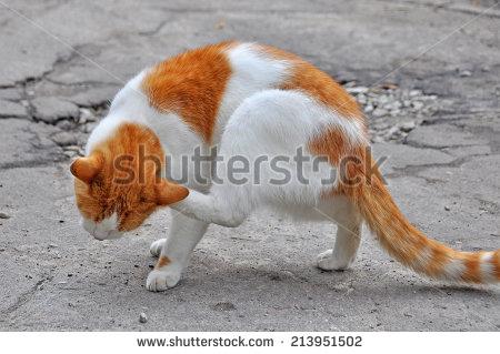 Some prefer a nice tender cat