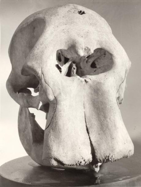 Could this elephant's skull have been mistaken as human?