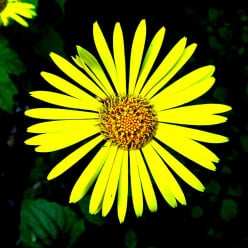 Is the Hebrew Bible a living entity?