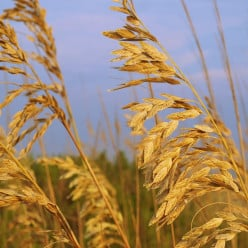 DO YOU BELIEVE IN PERSONAL PROPHECY?