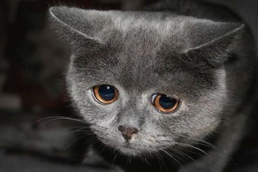This cat is terribly sad because you refuse to let it eat meat.  Cats are not vegans.  They need meat in their diet to maintain proper health.