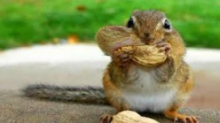 Ode to the squirrel