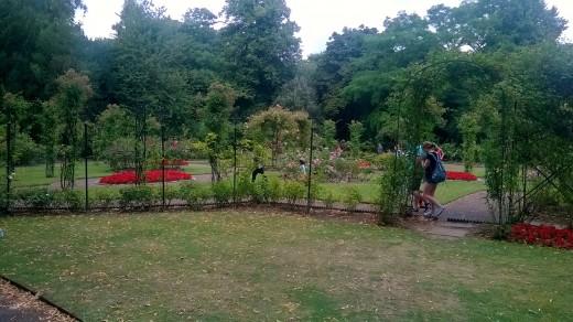 Rose Garden Warwick Castle