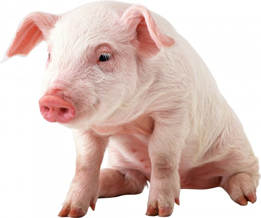 I'm not bacon, but you are. Now jump in that frying pan, fat boy.