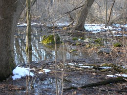 Saturated soils in buffer freshwater wetland support particular wetland ecosystems vegetation.