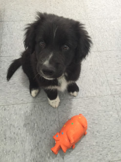 The Black Shelter Dog