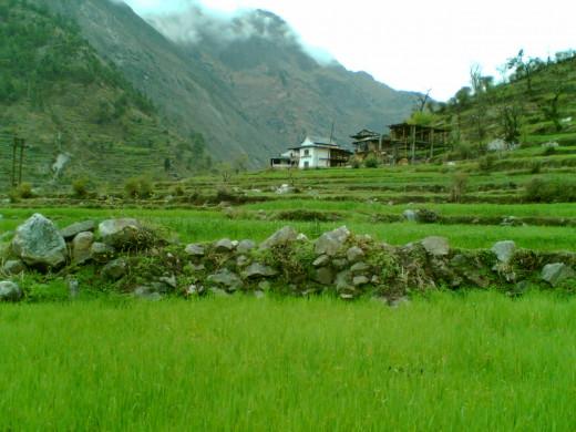 Tirthan Valley Himachal Pradesh