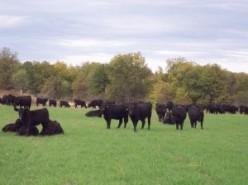 McDonald Tales | MT15 | July 1882, Gower Farm Work Began