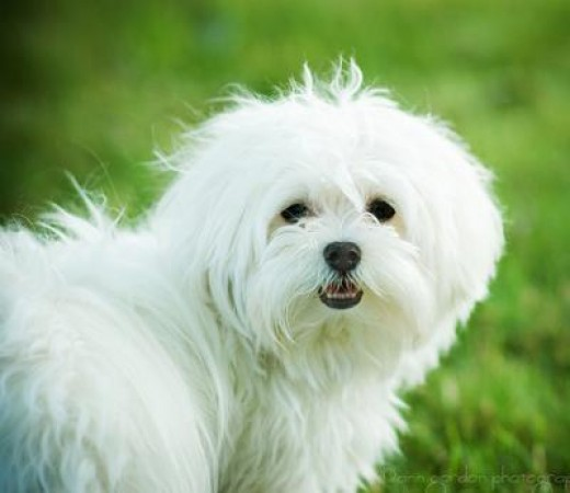Most Loving Dog Breeds In India