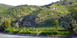 Picturesque terraced vineyards located between the towns of Melk and Krems.