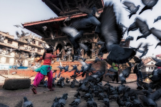 Pigeons in one of the durbar squares