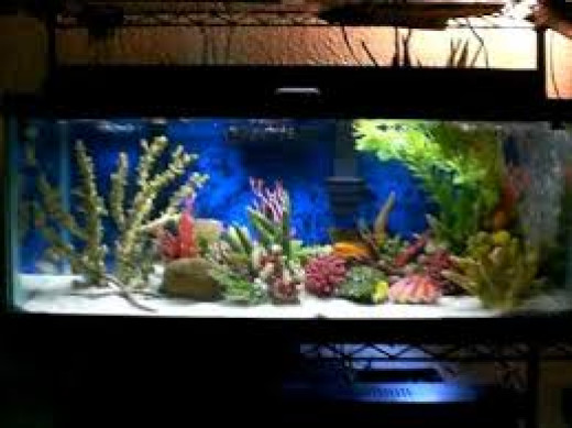 Aquarium : Fish Care