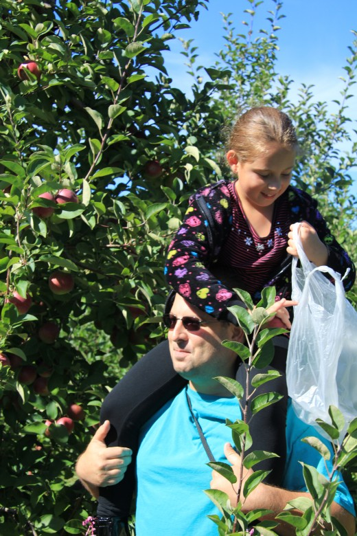 Picking at the top once again, Kayla and her dad Bill. Family fun for all ages, and the kids will always find a way to reach the top. The spectacular Behlng Apple Orchards in Mexico.