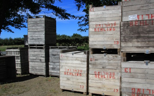 The crates piled high at the orchard the ones that will be traveling to the several stores for purchase by their customers. Behling Orchards.