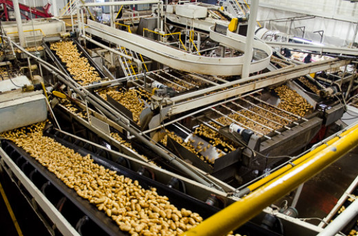 Idaho Potato Farm